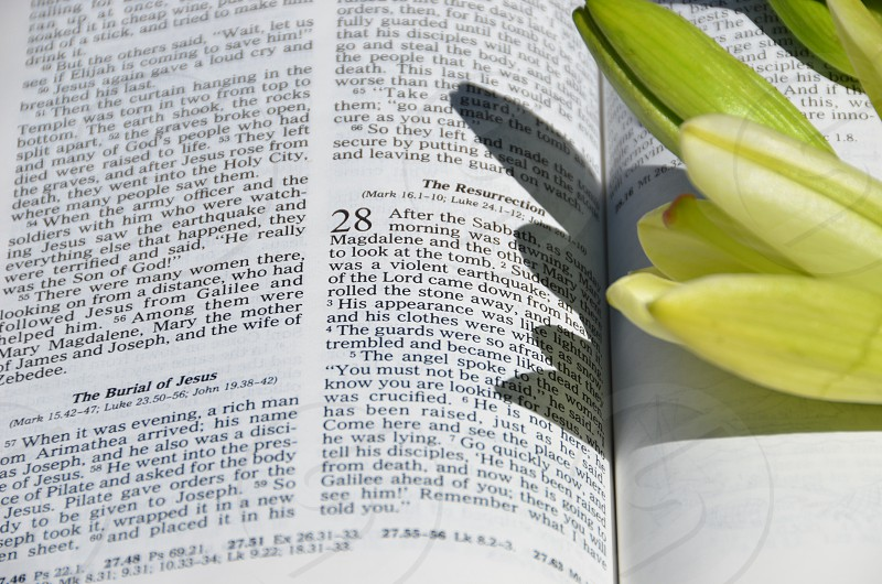 Bible Matthew 28 The Resurrection Easter Lilies photo