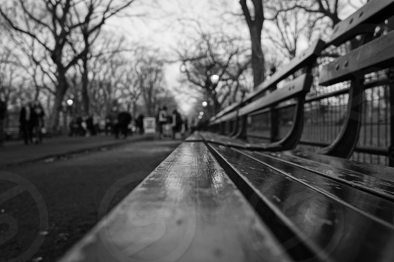 wooden bench in black and white photo