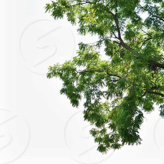 green leafy tree photo