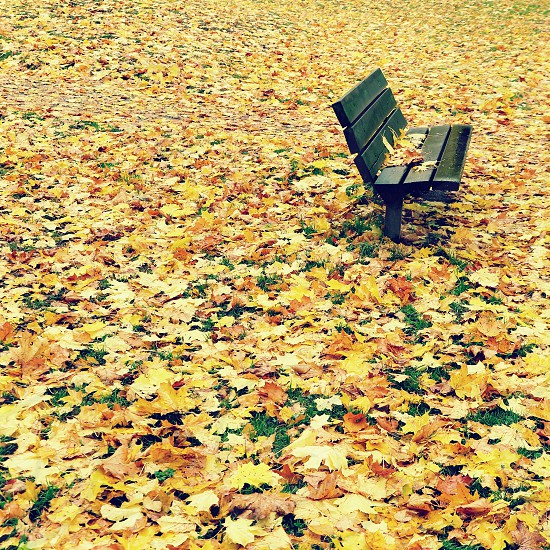 black wooden bench with maple leaves photo