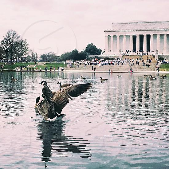 Washington Lincoln Memorial photo