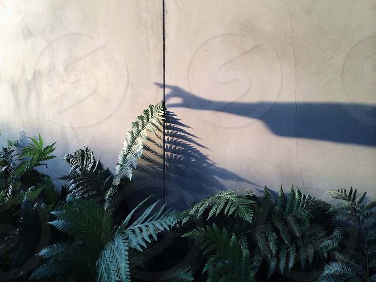 green fern plant and white wall with hand shadow photo