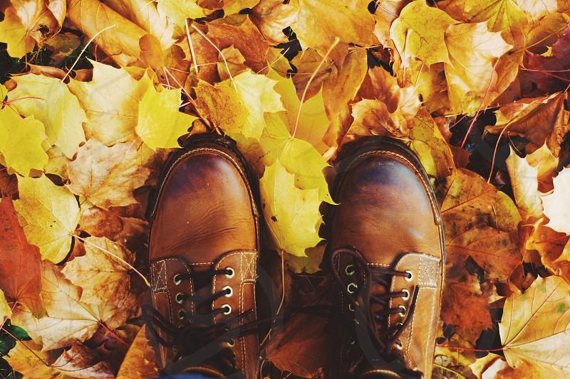 Fall; leaves; colors; beautiful; outdoors photo