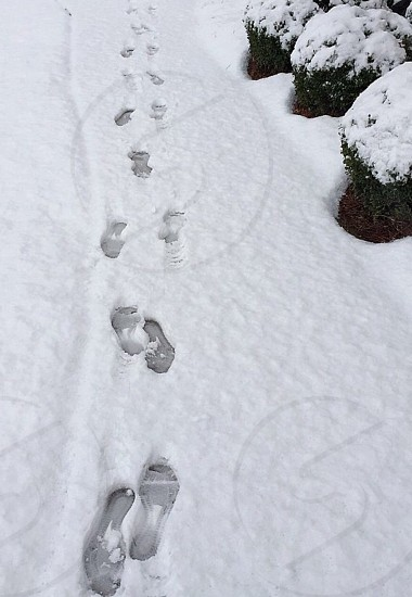 Footprints in Ice and Snow photo