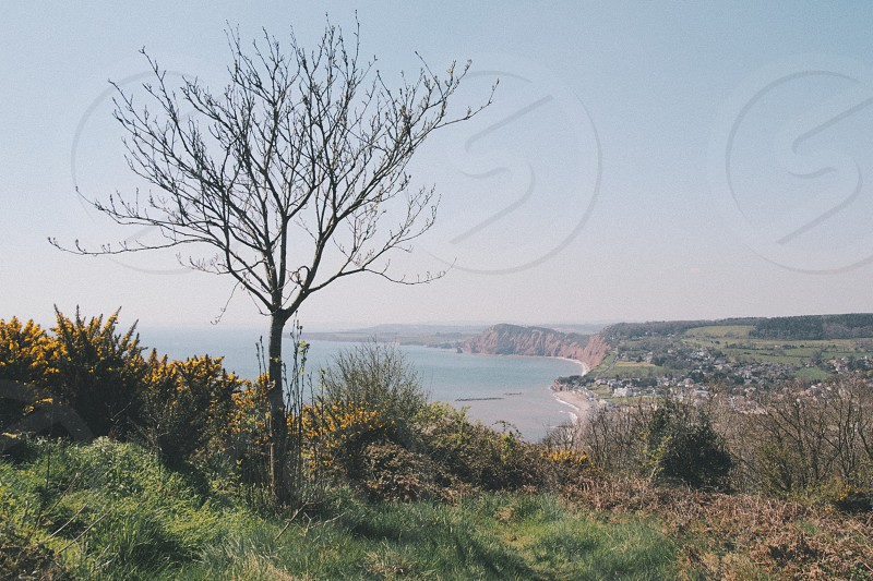 Salcombe Hill nr. Sidmouth Devon UK. photo