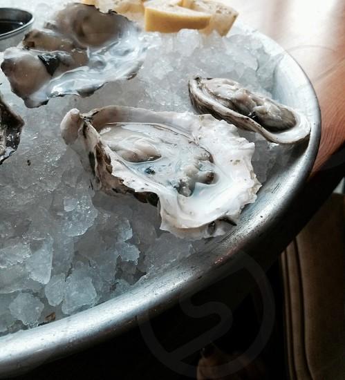 clams photo