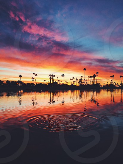 Sunrise palm trees clouds beautiful reflection water photo