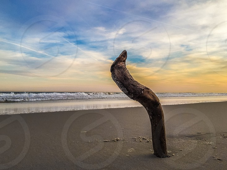 brown driftwood on grey sand near body of water during daytime photo