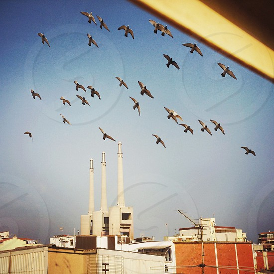 Pigeons fly past an old factory in Sant Adria near Barcelona Spain. photo