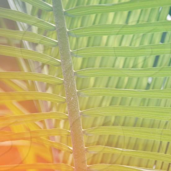 green palm tree leaf photo