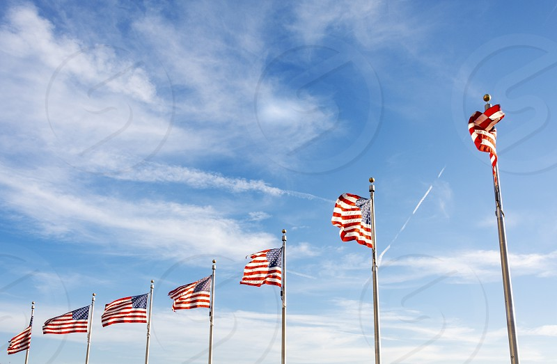 A group of American flags waving on a sunny day. Concept of patriotism and democracy photo