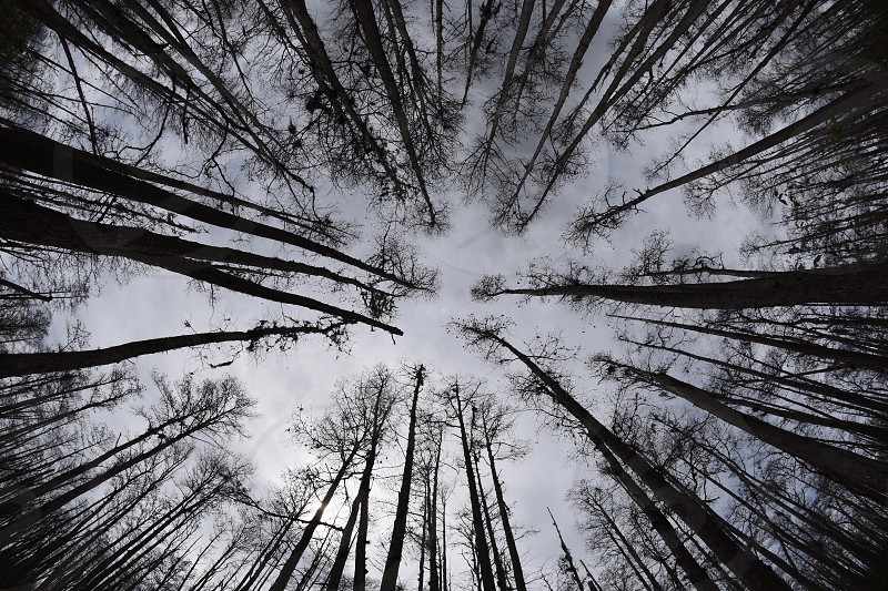 macro photography of trees under cloudy sky photo