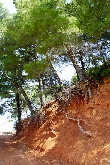 Mediterranean pine forest track with tree roots viewable in Majorca photo