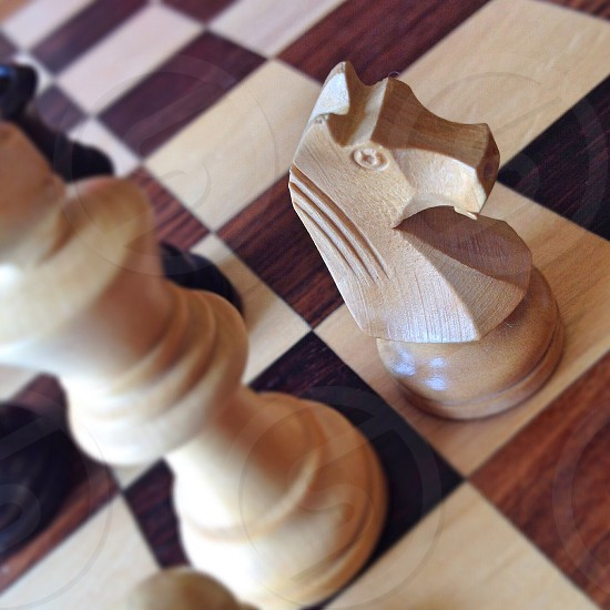 wooden chess piece knight  photo