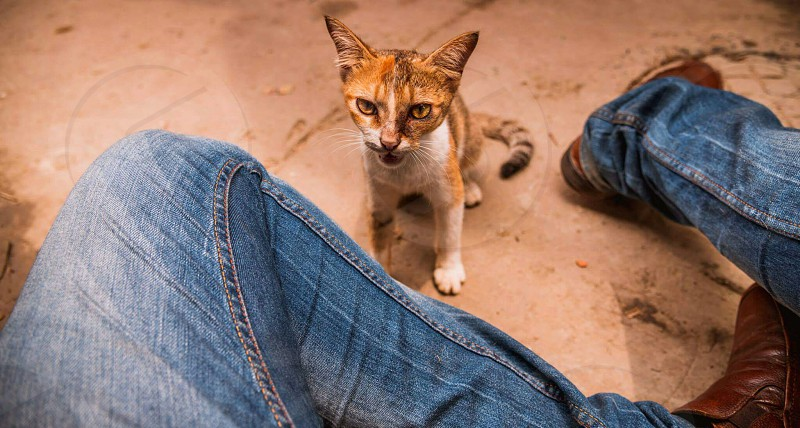 catty photo
