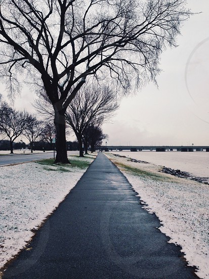 concrete walkway and winter tree photography photo