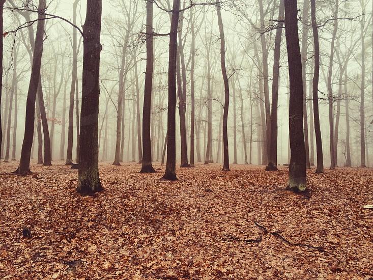 autumn autumn forest autumn landscape autumn season photo