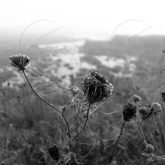 gray scale photo of flower photo