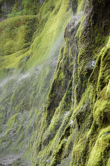 Water moss green photo