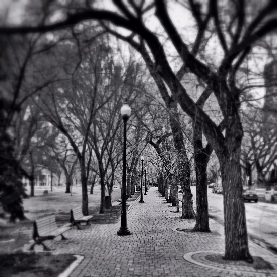 grayscale shot of the park photo