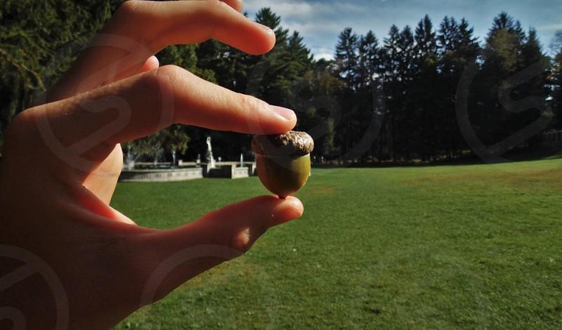saratoga NY hand acorn fountain grass trees garden  photo