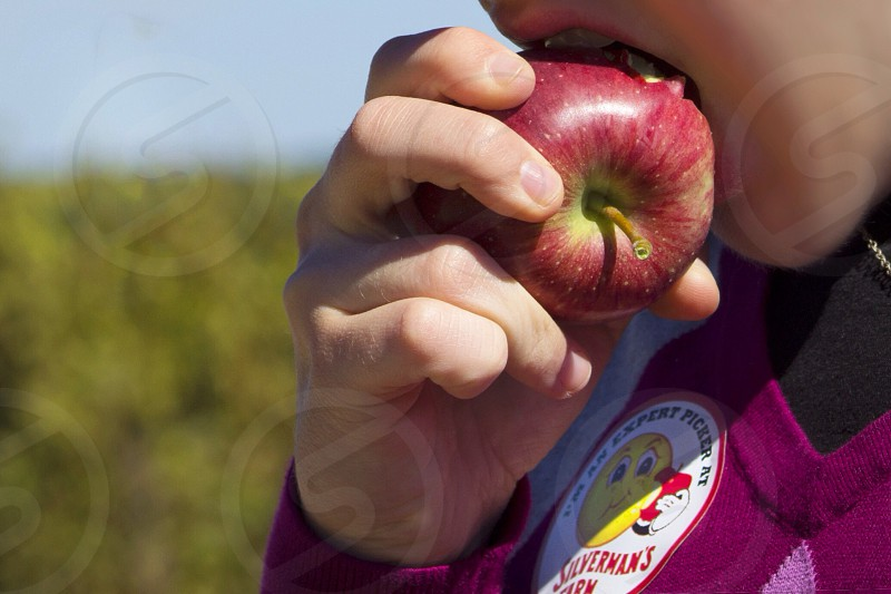 person holding red apple photo