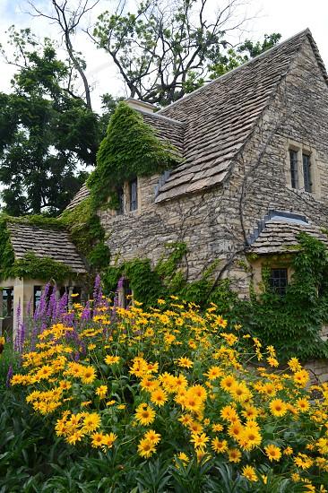 Ivy flower garden stone cottage photo