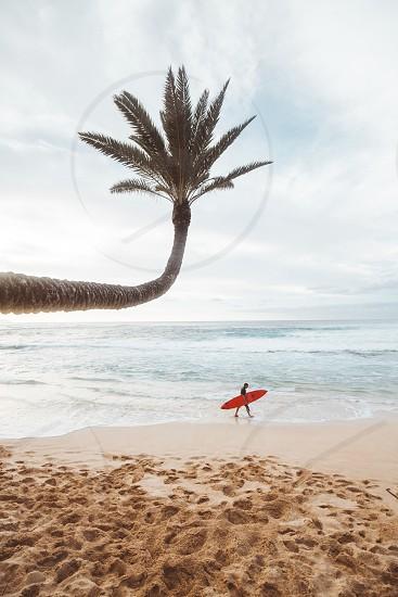 Hawaii beach ocean pacific sand surf adventure travel lifestyle sea Maui Kauai Oahu hawaiian island  photo