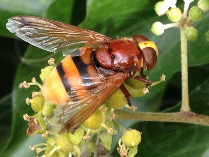 Nature wasp bee  photo
