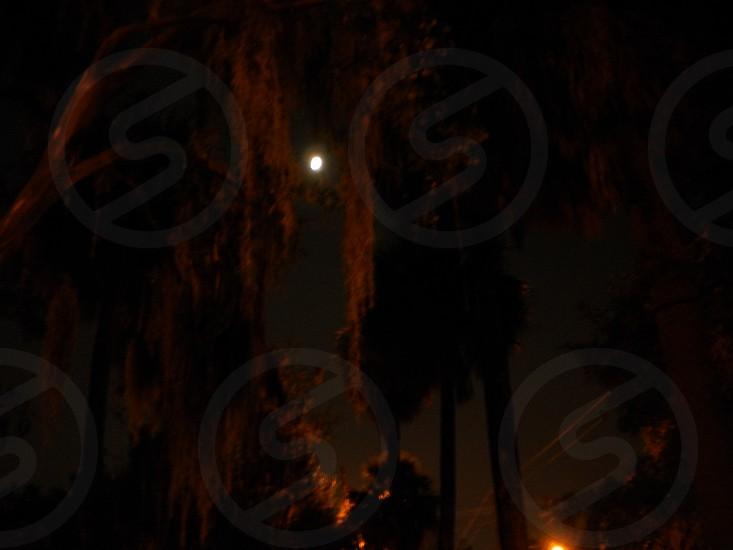 Savannah GA at night photo