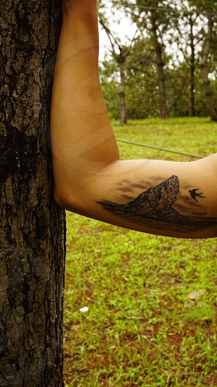 person holding the tree with brown mountain tattoo on the arms photo
