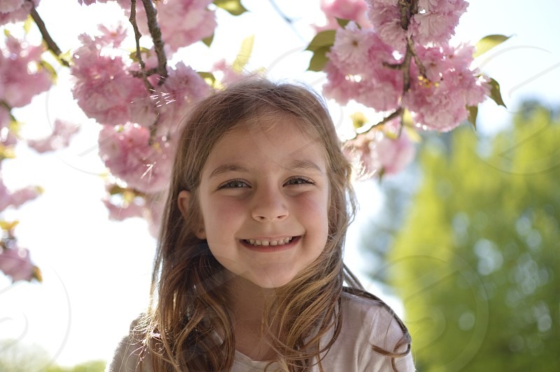 Cherry blossoms spring flowers pink smile photo