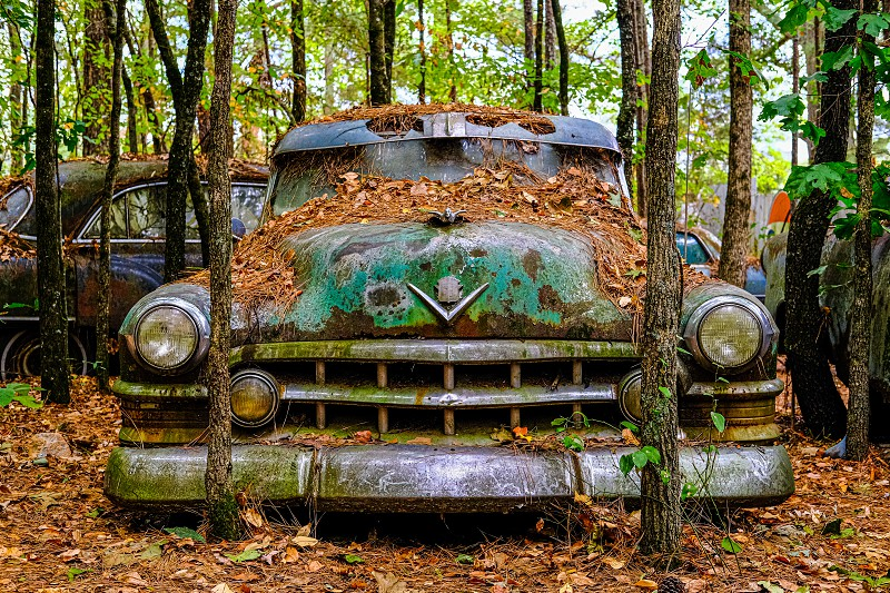 There is a place in North Georgia called Old Car City. It is an absolute playground for photographers. It is a family owned business that has been around for about 90 years. There are 34 acres of woods with about 4000 old cars ranging from the early 20th century to the early 1970s. This old Cadillac is just one of them. photo