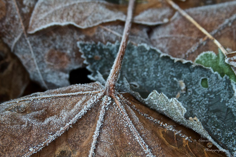 Frost in the Fall photo