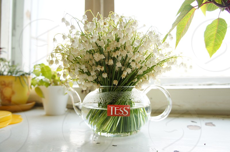 may-lily flowers glass teapot photo