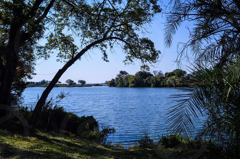 Zambezi river beginning of spring wildlife nature africa photo