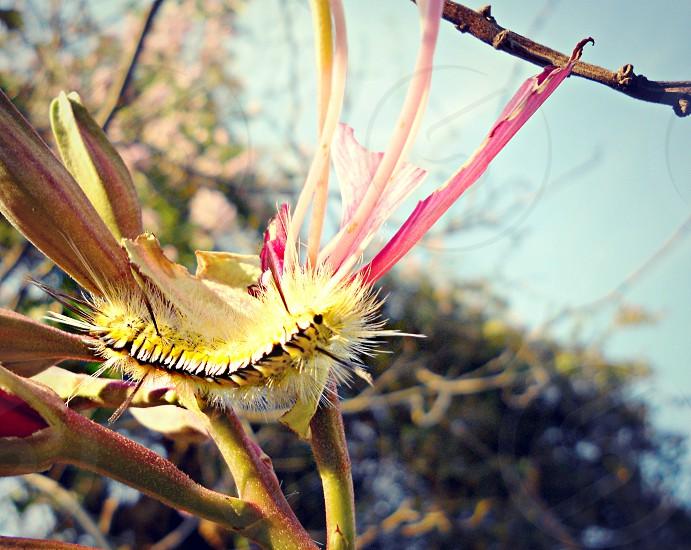 Caterpillar on a flower. photo