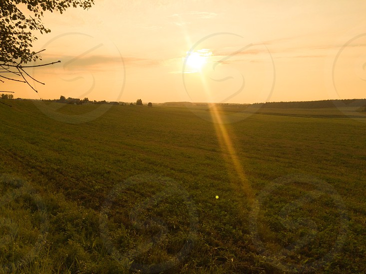 Summer evening  photo