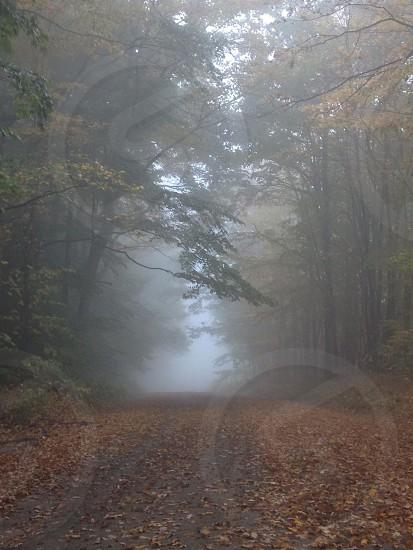 Fall in North Bingham TWP.  photo