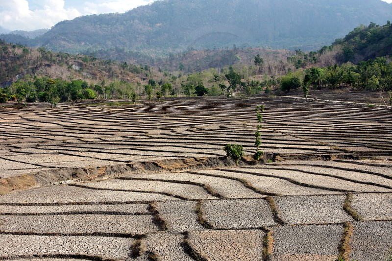 the landscape and Ricefield near the town of Loihuno in the east of East Timor in southeastasia. photo