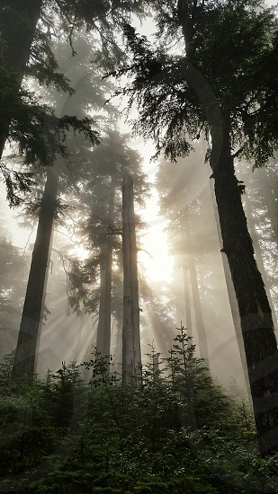 Mt Hood forest photo
