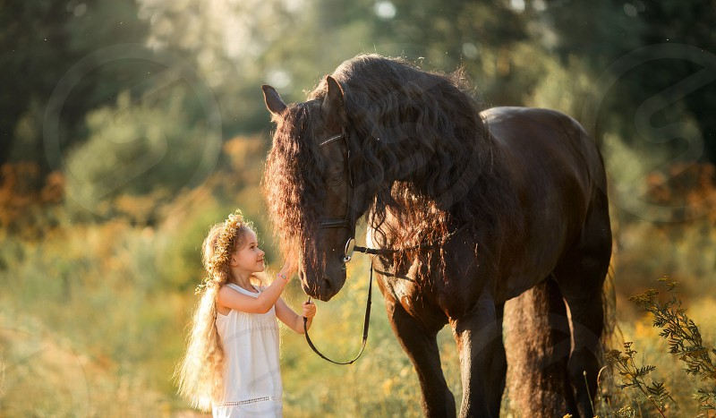 Girl with  the black fresian horse at summer evening  photo