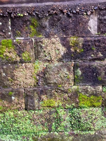 gray bricks photo