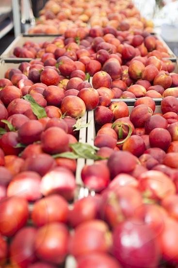 Peach farmers market food fruit yummy photo