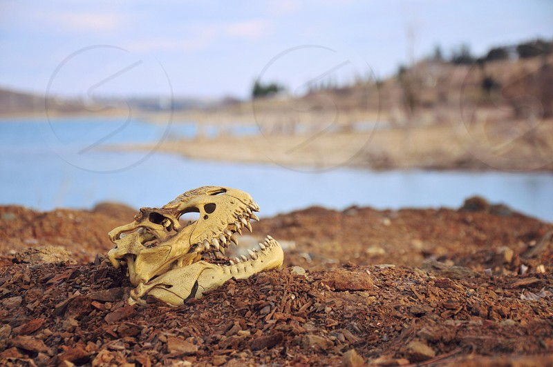 white animal skull on dirt by a lake photo