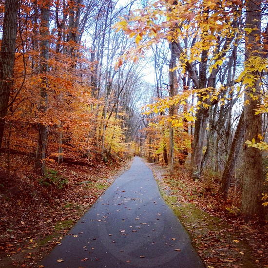 pathway and autumn tree nature photography photo