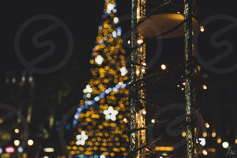 Christmas lights Christmas tree  photo