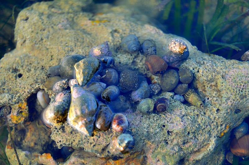 Hermet Crabs photo