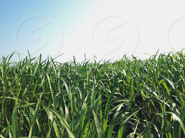 green field under blue sky photo