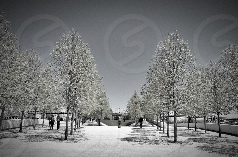 people under snowy trees photo